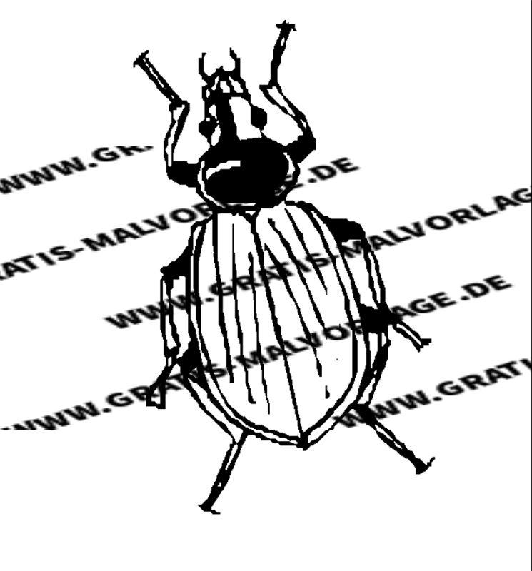 insekten  kostenlos gratis malvorlagen herunterladen